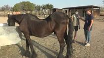 Así rescatan animales de granja en Santuario Vegan