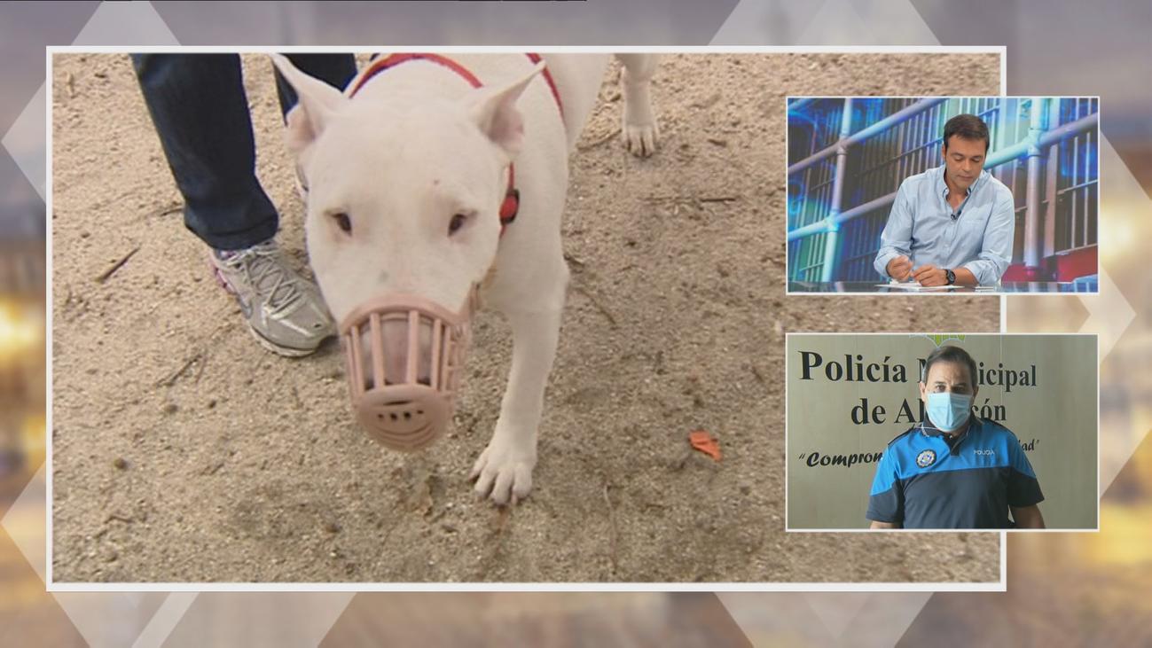 La Policía de Alcorcón alerta sobre la presencia de perros peligrosos sin bozal ni licencia