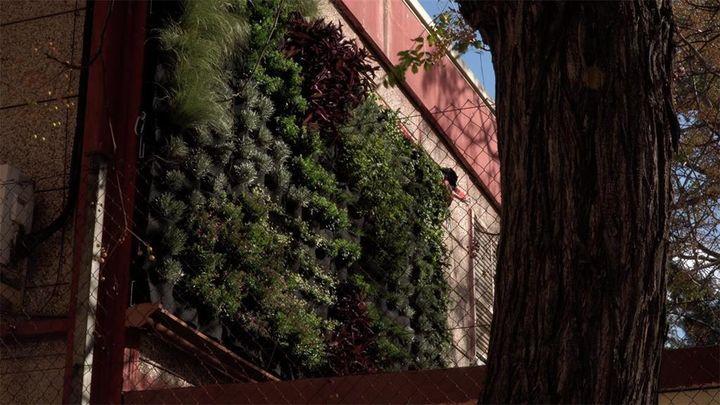 Así funcionan los jardines verticales