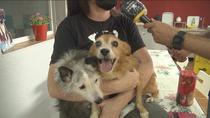 Conocemos a los diez perros rescatados por la protectora ALBA