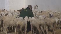 Madrid  dará ayudas a los ganaderos de la región para paliar  las pérdidas sufridas por el coronavirus