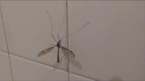Repelentes contra los moquitos 'Culex', transmisores del virus del Nilo en Andalucía