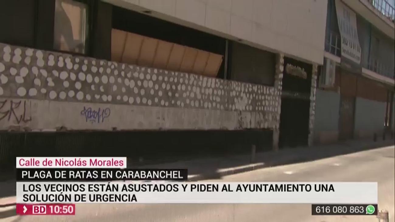 Plaga de ratas en Carabanchel:  hasta 21 ratas en 4 metros de acera