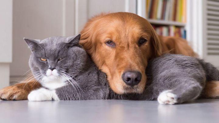 Las relaciones de familia con mascotas en casa