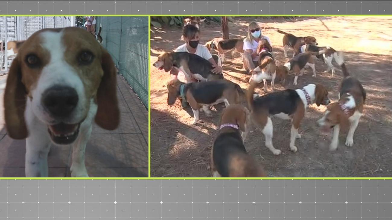 Una protectora evita que sacrifiquen a 32 perros