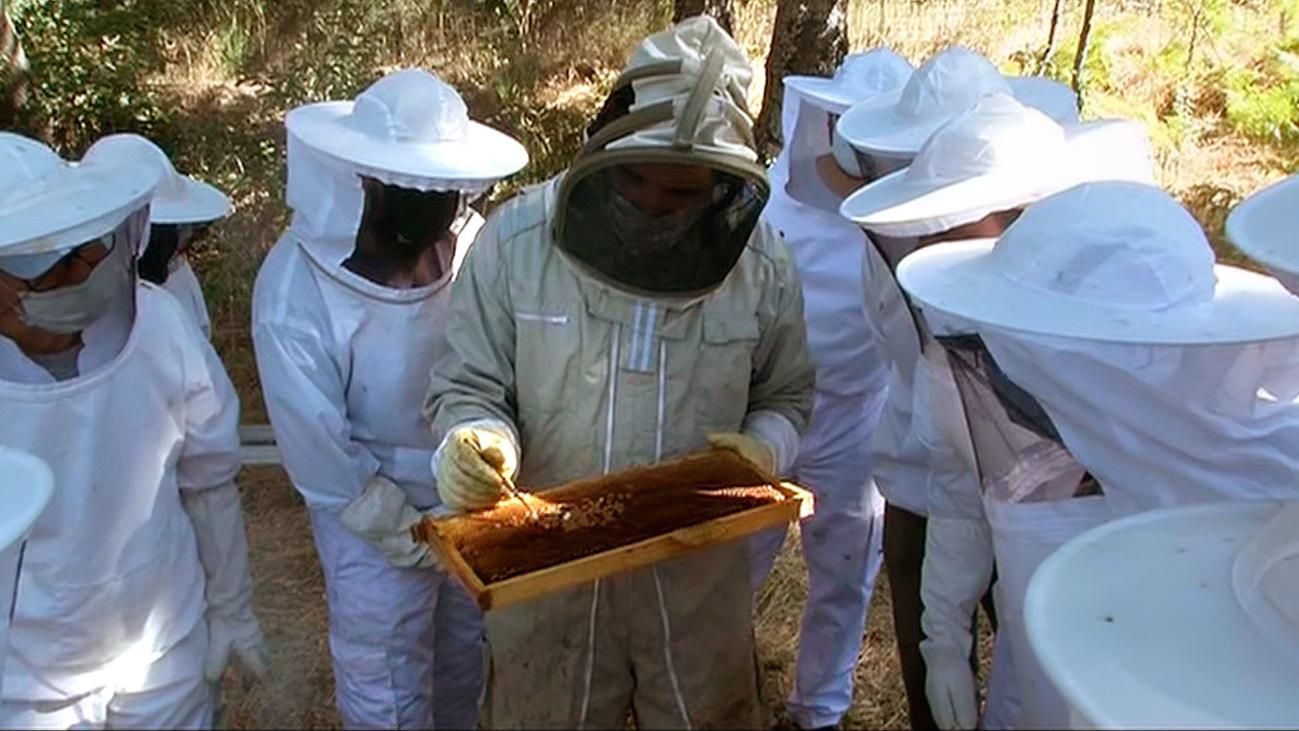 Asistimos a un curso de iniciación a la apicultura en Bustarviejo