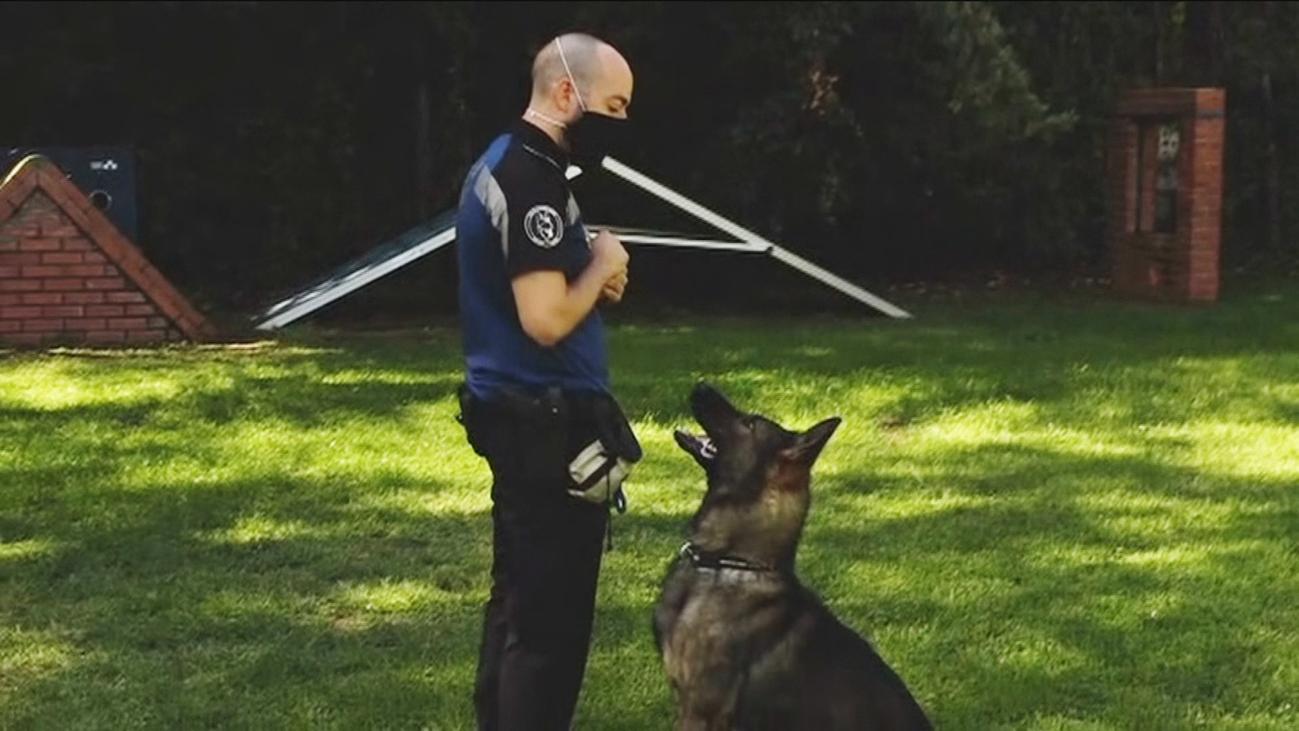 Conocemos la sección canina de la Policía Municipal