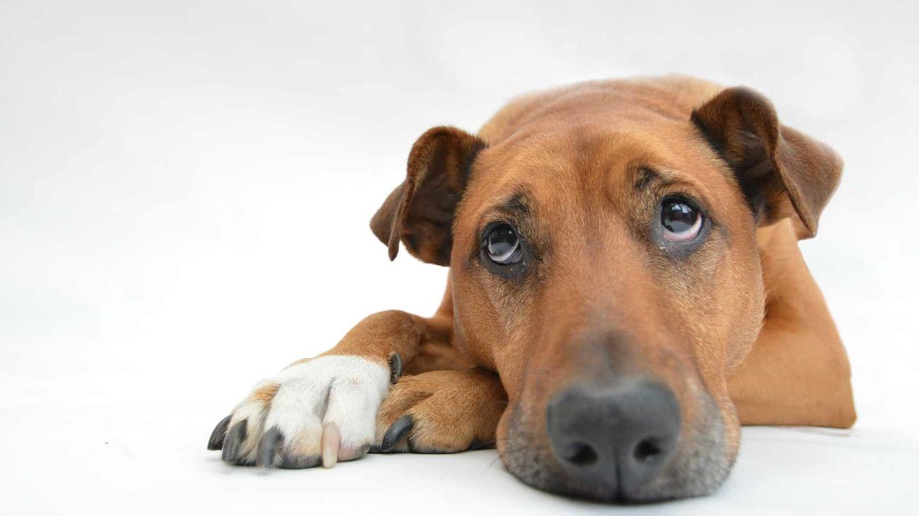 Nuestro lado más animal: el sentimiento de tristeza