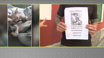 Ofrece una recompensa de 500€ por recuperar a su gato desaparecido en Puerta del Ángel