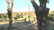 La indignación de los vecinos de Guadarrama contra el traslado de árboles