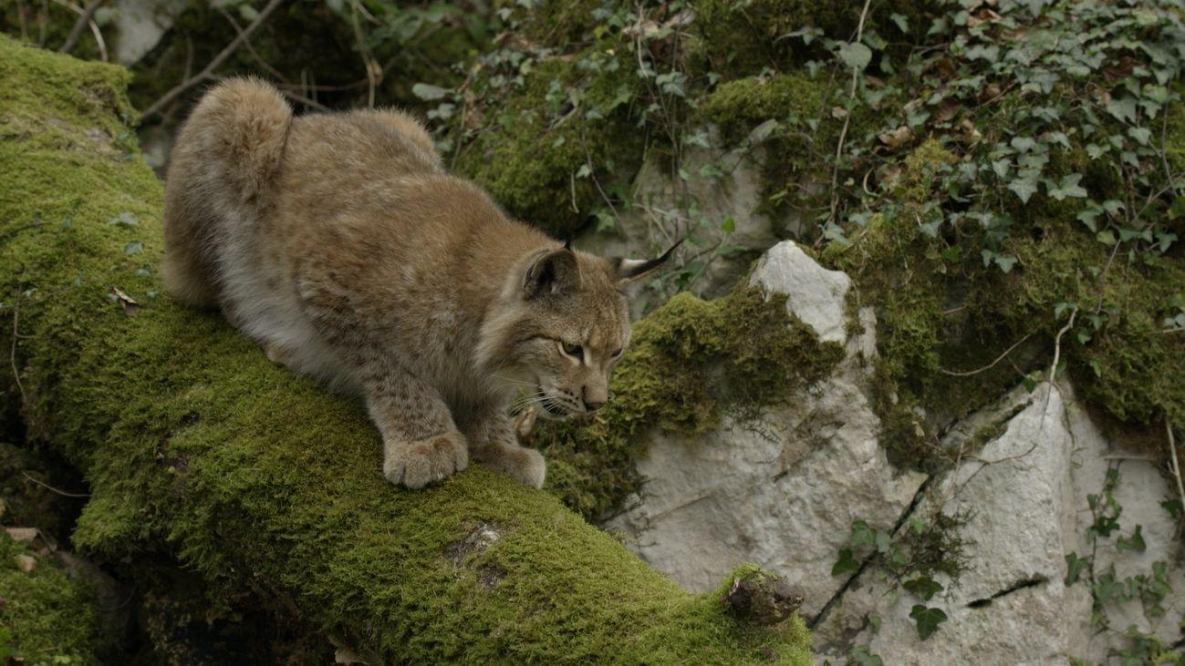 Escena del documental 'Los habitantes del bosque'