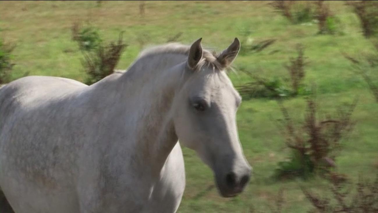 Se investiga si una secta de origen satánico podría estar detrás de más de un centenar ataques a caballos en Francia