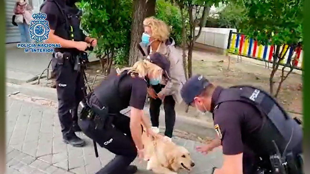 Detenido un hombre tras robar un coche con un perro dentro en el barrio de Barajas