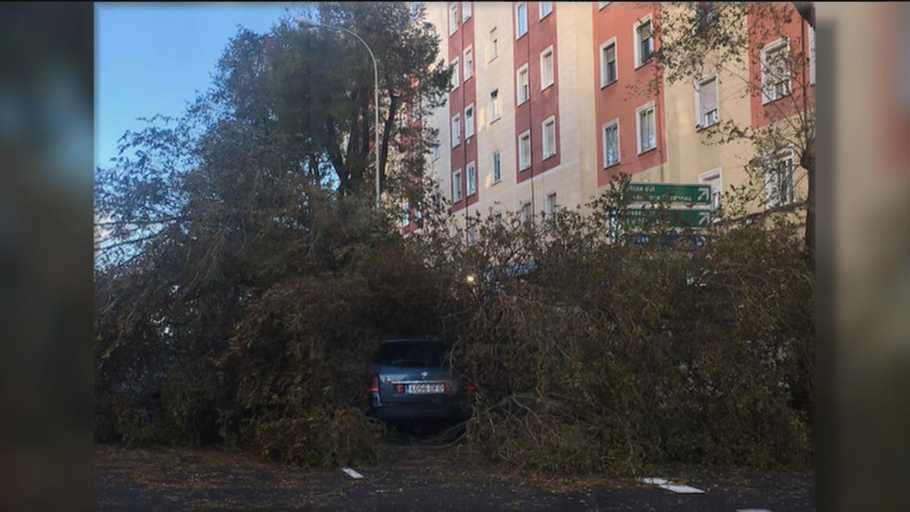 Varios árboles caídos en Madrid por las fuertes rachas de viento