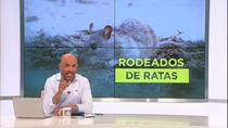 Preocupación ante una plaga de ratas en Vicálvaro