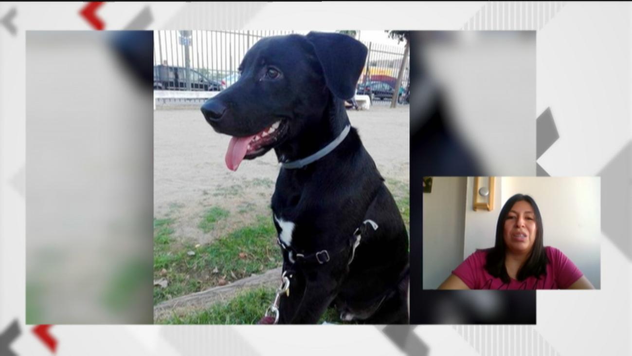 Le roban a su perro 'Cooper' en Parla y pide ayuda porque no puede ir a buscarlo por el confinamiento