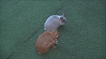 Una residencia, guardería y criadero de conejos en Moralzarzal