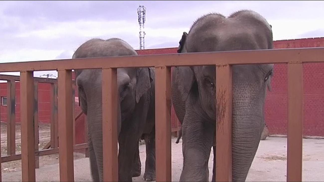 Asistimos al entrenamiento de los dos elefantes más longevos del Safari