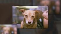 Buscan a Pícara, una perrita perdida en Madrid Río