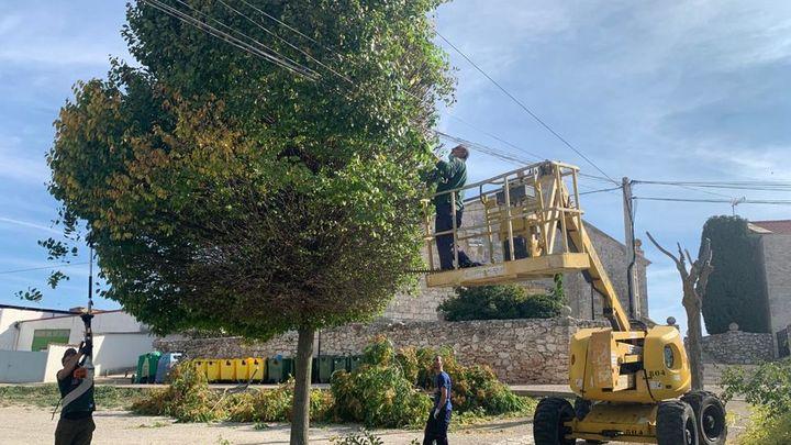 Pozuelo del Rey inicia su primer Plan de Poda Integral del arbolado del municipio