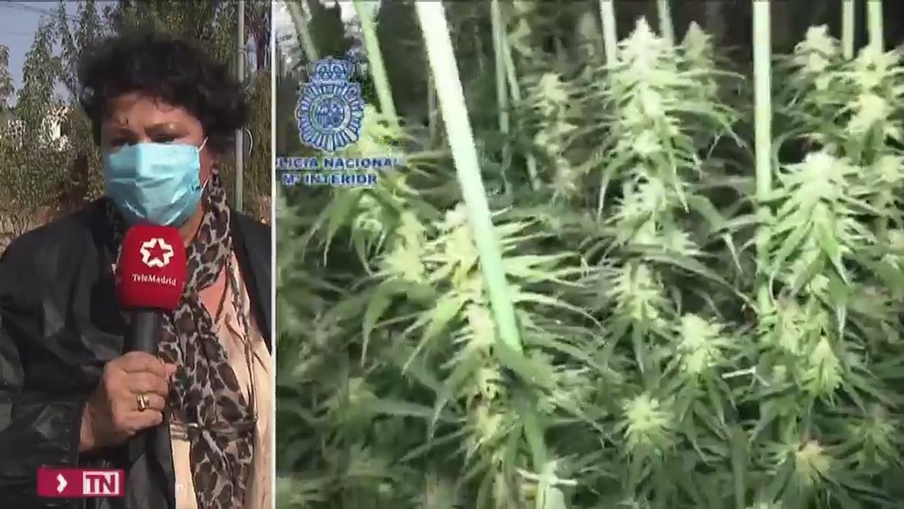 Arde una chabola que escondía una plantación de marihuana en la Cañada Real