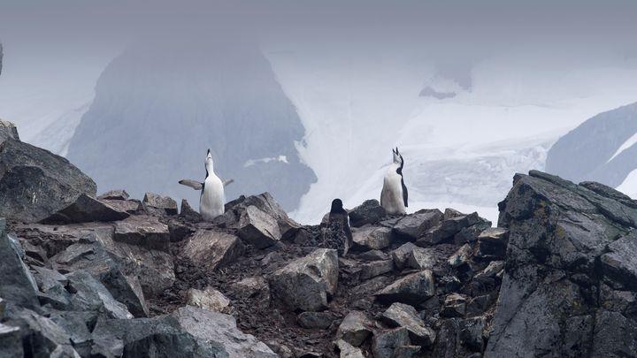 El documental 'Antártida: un mensaje de otro planeta' llega a los cines