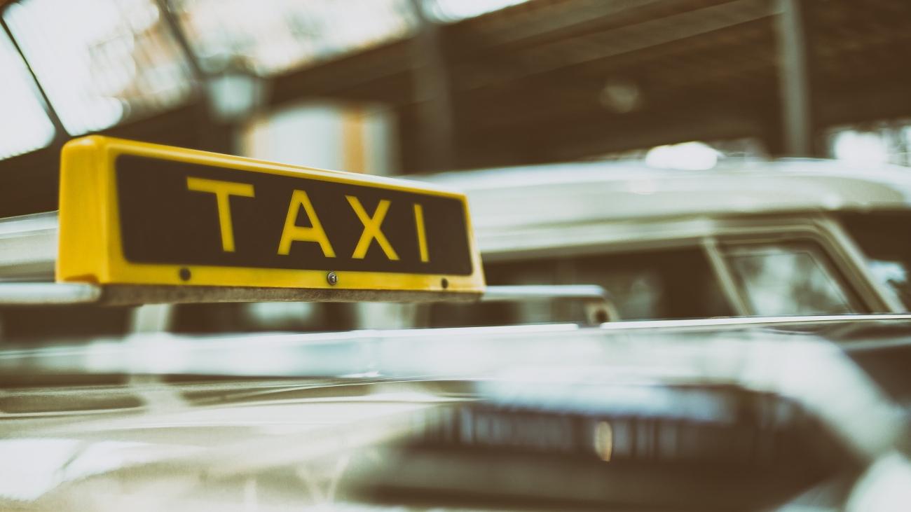 Llegan los taxis para viajar con tu mascota