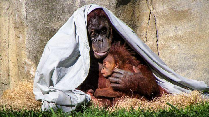 El instinto de protección en animales y humanos