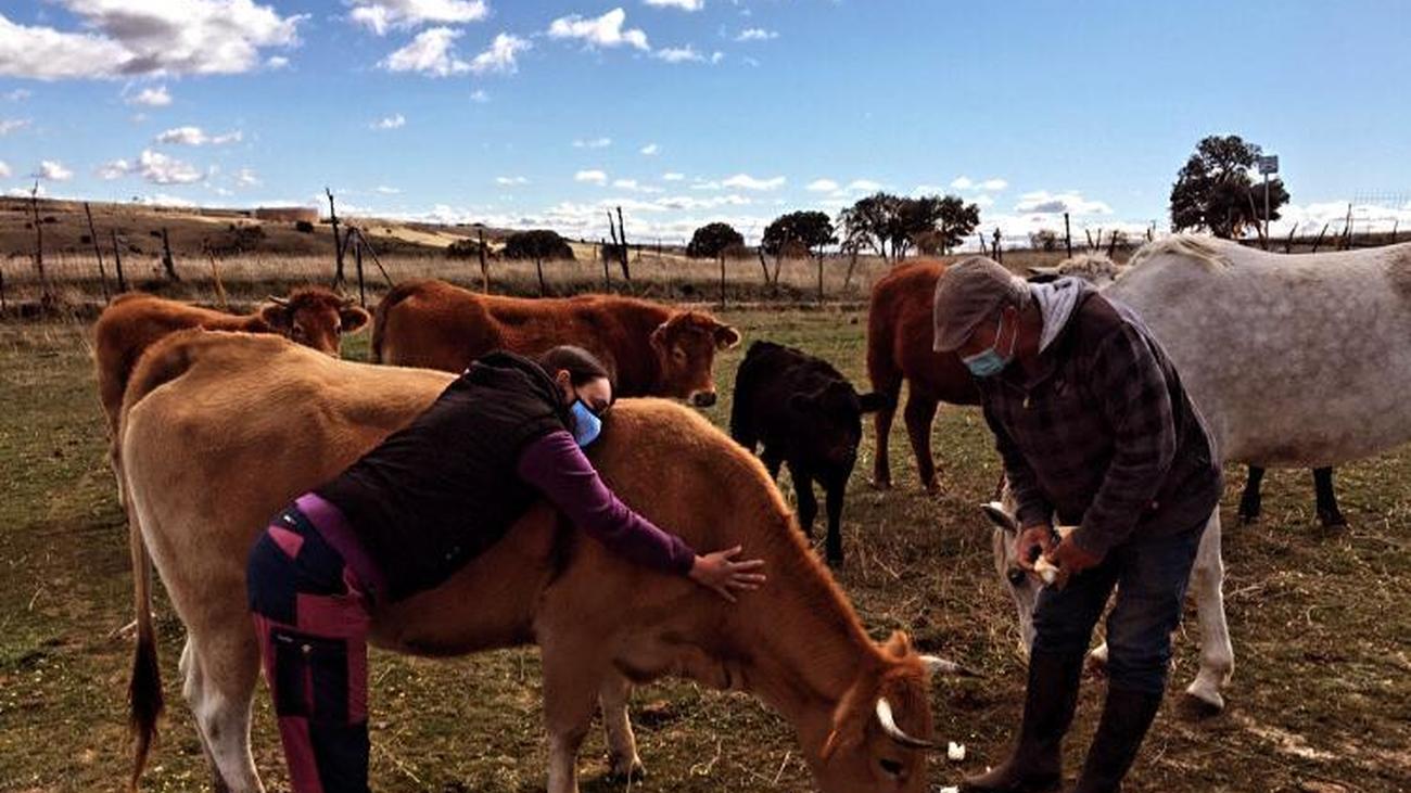 Abrazar vacas: el nuevo método para aliviar el estrés