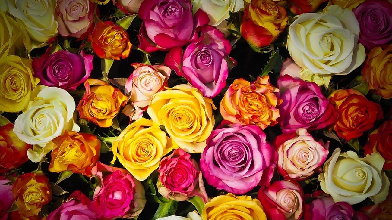 ¿Dónde comprar flores baratas en Madrid?