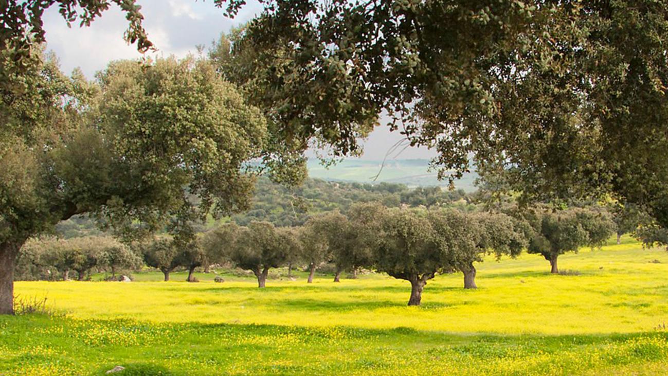 Un bosque para esparcir las cenizas de forma ecológica y legal