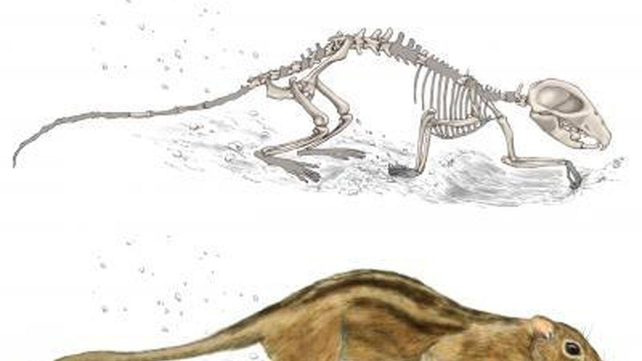 Mamífero filikomys primaevus que vivió en el Cretácico Superior