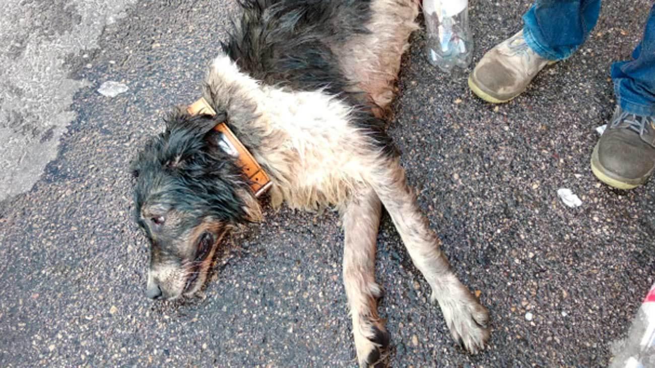 El abandono y maltrato animal crece en España en tiempos de pandemia
