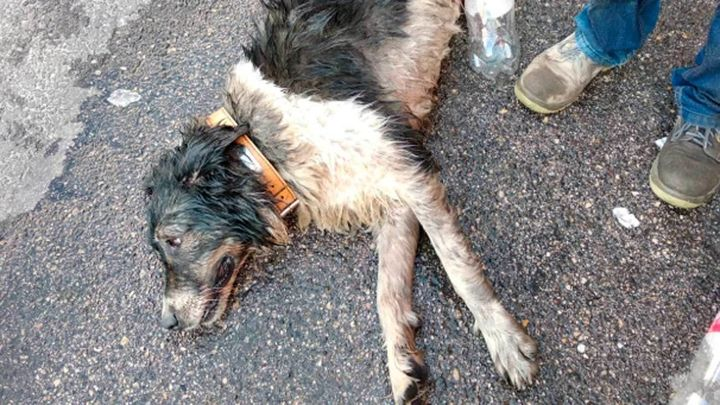 Las protectoras denuncian la impunidad que hay en España frente al maltrato y el abandono animal