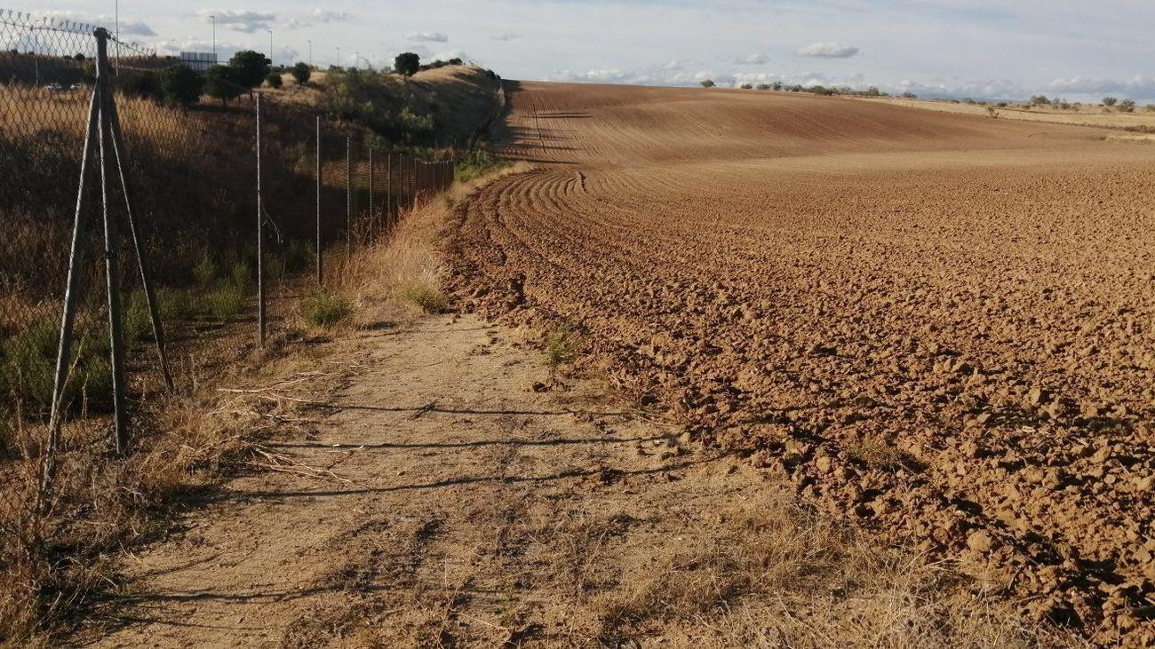 Camino de servicio de la M-50 convertido en terreno agrícola