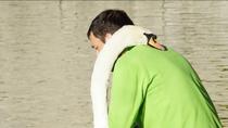 El inesperado final de la historia entre un cisne y su cuidador