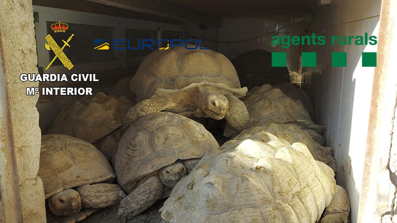 La Guardia Civil descubrió  tortugas valoradas en cerca de 30.000 euros