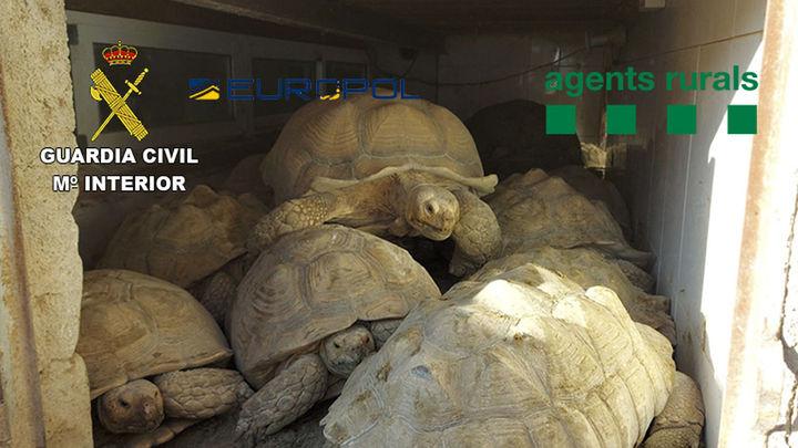 Cae una red por traficar con 300 especies de alta protección, entre ellas tortugas valoradas en 30.000 euros