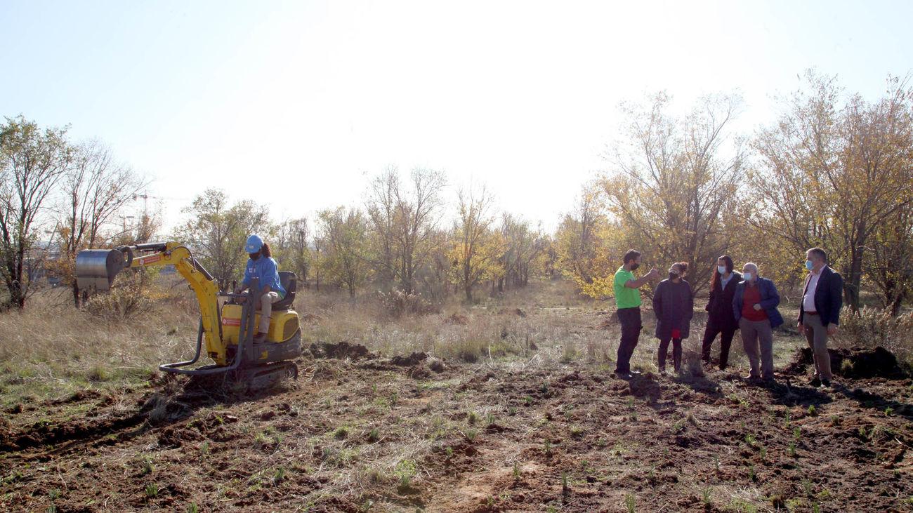 Reforestación parcela Alcobendas