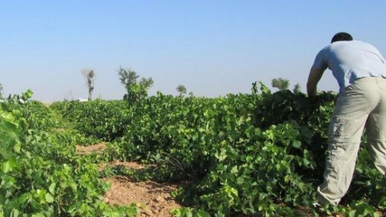 La Autónoma investiga las iniciativas agroecológicas más innovadoras del país