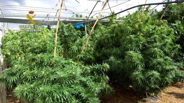 Villa del Prado, epicentro de una trama que engañaba a agricultores para cultivar marihuana