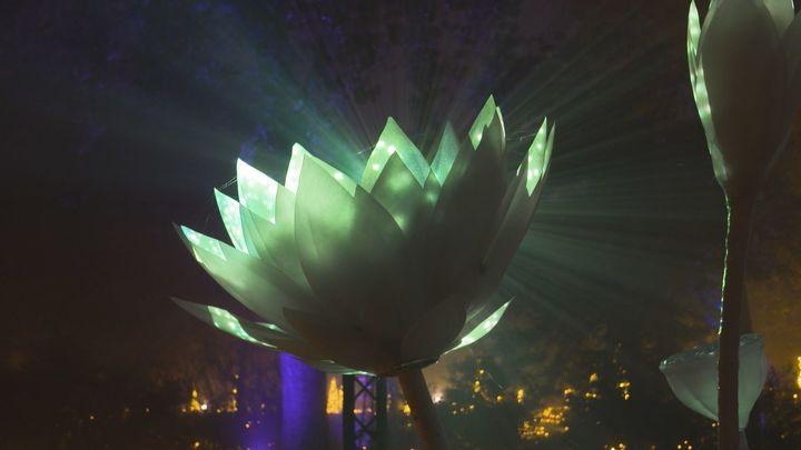 Una mágica experiencia inmersiva en el Real Jardín Botánico