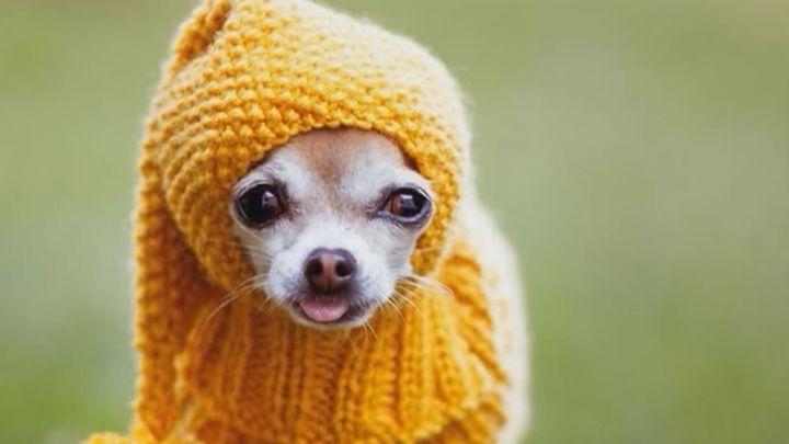 Dogfluencers, los perros de moda en Instagram