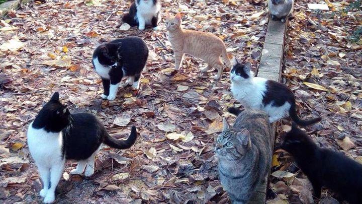 Casarrubuelos advierte del riesgo para la salud de las colonias felinas