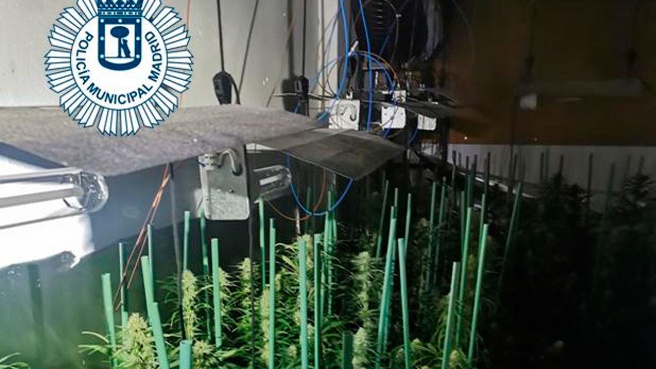 Plantación de marihuana en una vivienda de Villaverde