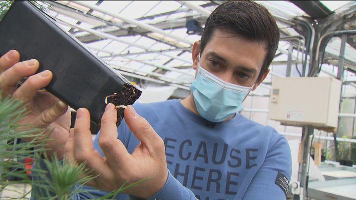 Un joven biólogo madrileño, portada de Science por su estudio sobre cómo compiten las raíces de las plantas