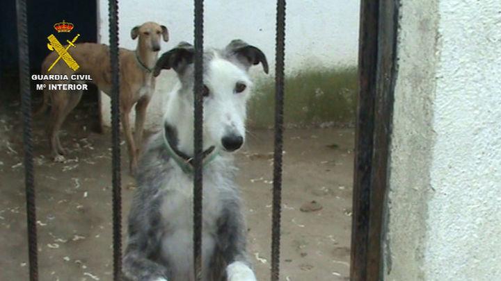 Clausurada en Parla una perrera clandestina y rescatados un centenar de perros