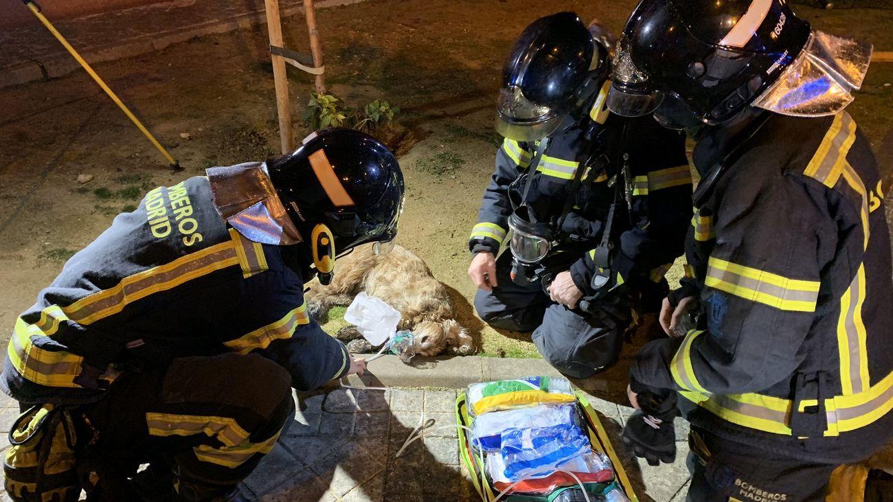 Los bomberos han rescatado con vida a un perro atrapado en la vivienda de San Blas