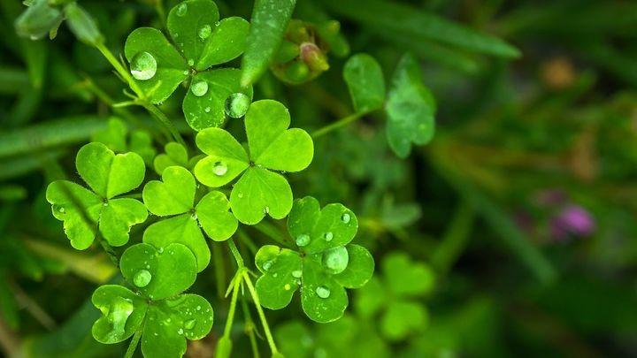 Las plantas que nos dan suerte