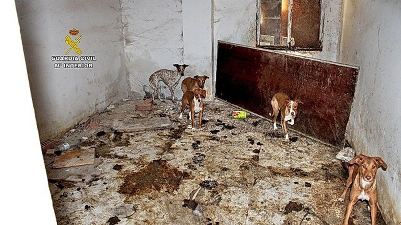 LA Guardia Civil encuentra en una finca a decenas de perros en condiciones deplorables